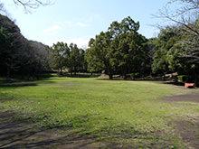 疎林の広場